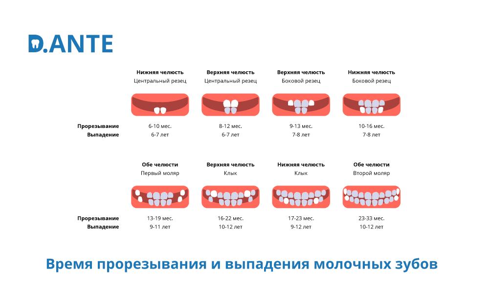 прорезывание и выпадение зубов